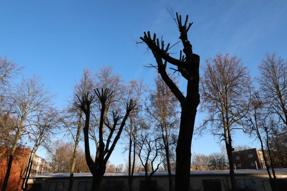 Medžiuose palieka velnio ratus