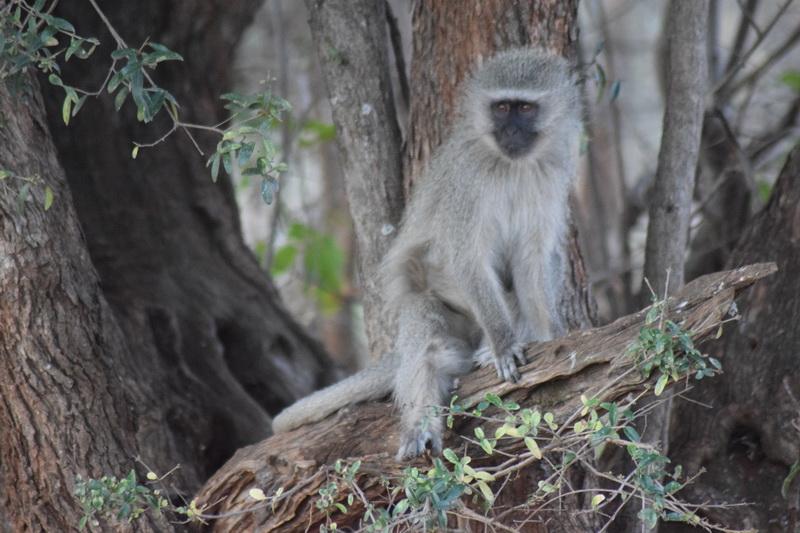Pilanesbergo nacionalinis parkas. ASMENINIO ARCHYVO nuotr.