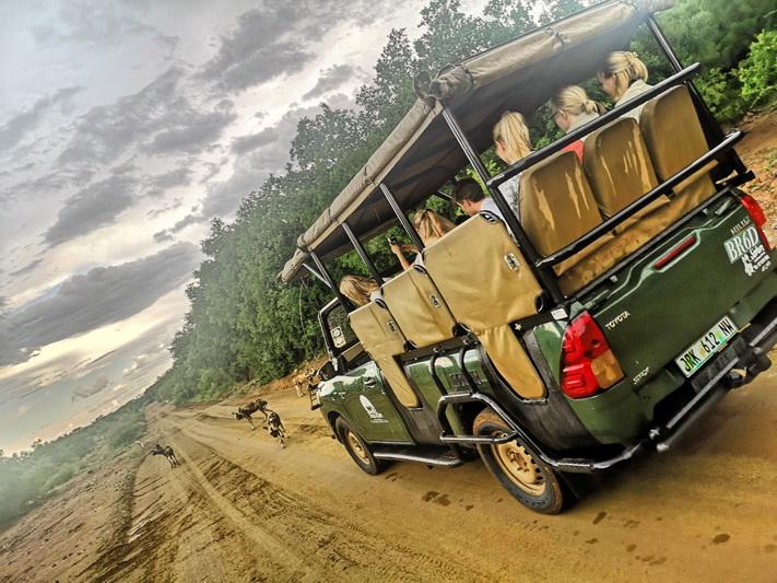Laukiniai šunys prieš safari mašiną Pilanesbergo nacionaliniame parke. ASMENINIO ARCHYVO nuotr.