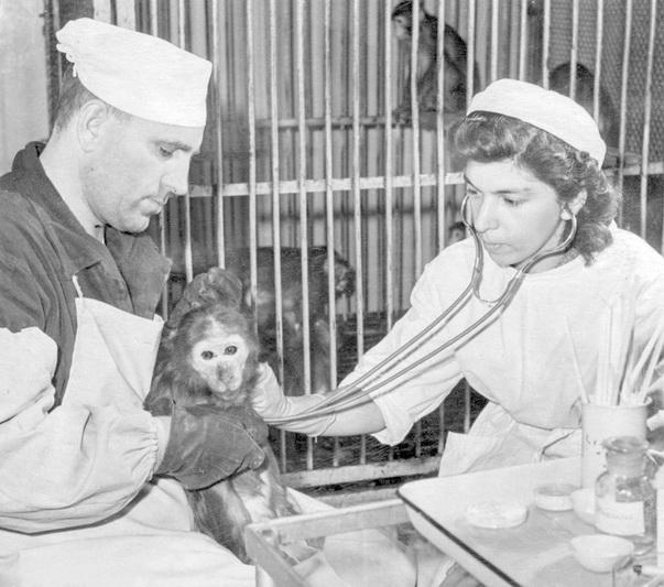 Poliomielito vakcinos bandymai su beždžionėmis 1958-aisiais metais. MCA nuotr.
