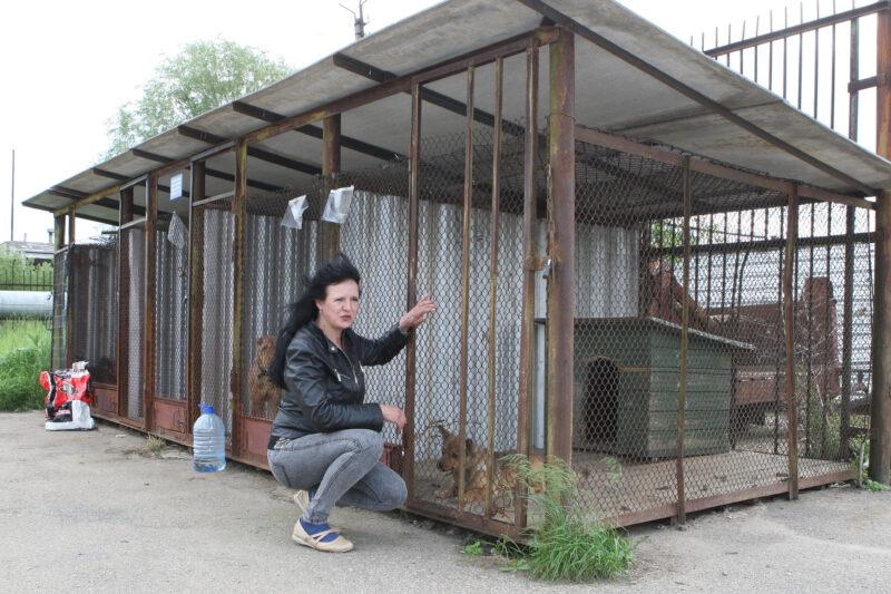 """Panevėžio gyvūnų globos draugijos vadovė Rūta Liberienė net neabejoja: į gatves ar pamiškes išmetamų gyvūnų tik padaugės. """"SEKUNDĖS"""" nuotr."""