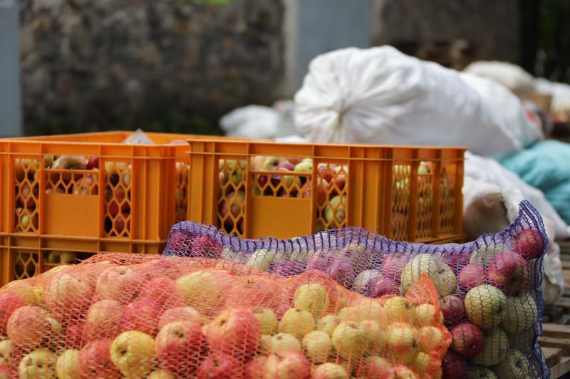 Obuolių spaudėjai pastebi, kad klientai tampa sąmoningesni – atveža švarius obuolius, nors dar pernai buvo nesibodėjusių vaisius supilti į maišą nuo trąšų. I. STULGAITĖS-KRIUKIENĖS nuotr.